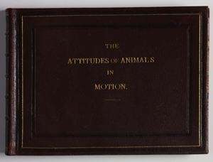 Image of The Attitudes of Animals in Motion: A Series of Photographs Illustrating the Consecutive Positions Assumed by Animals in Performing Various Movements; Executed at Palo Alto, California, in 1878 and 1879